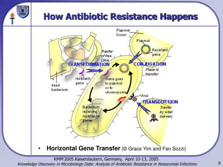 a research on microbial resistance to antibiotics Antimicrobial resistance and infection control is a global forum for all those working on the prevention, diagnostic and treatment of health-care associated infections and antimicrobial resistance development in all health-care settings.