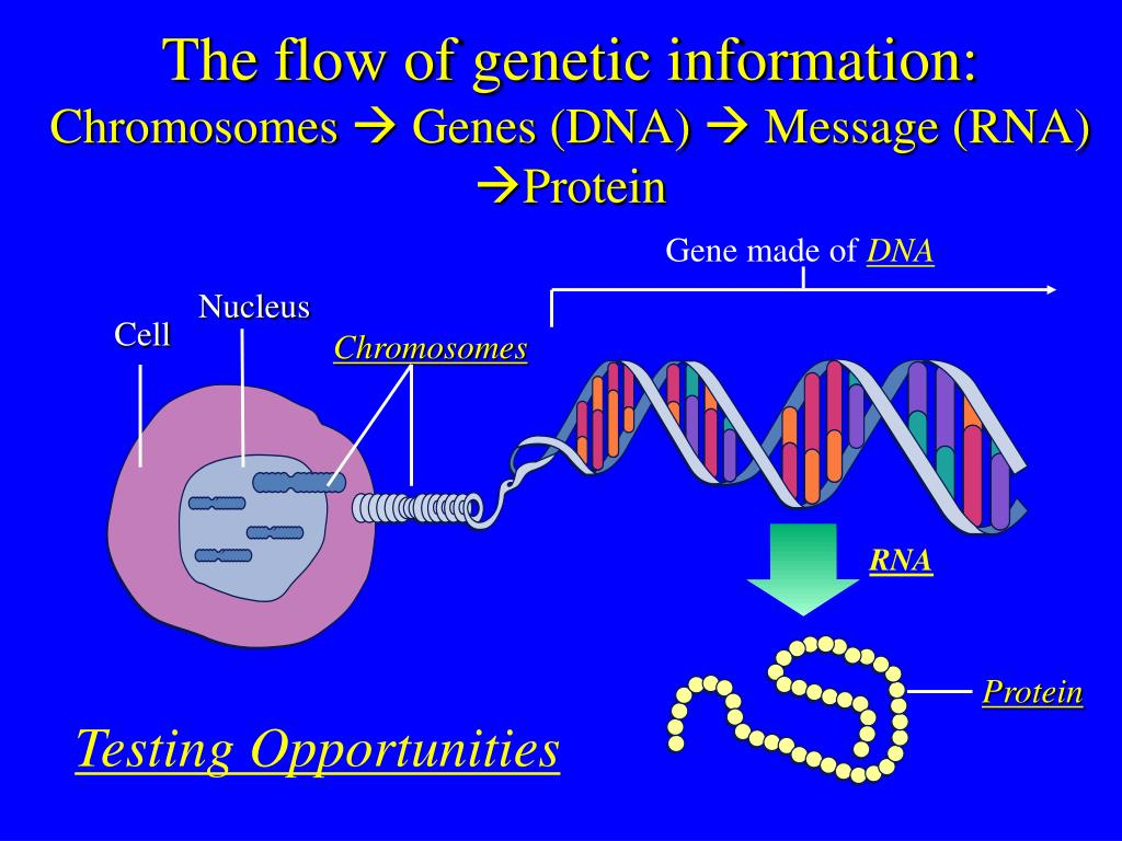 The flow of genetic information: