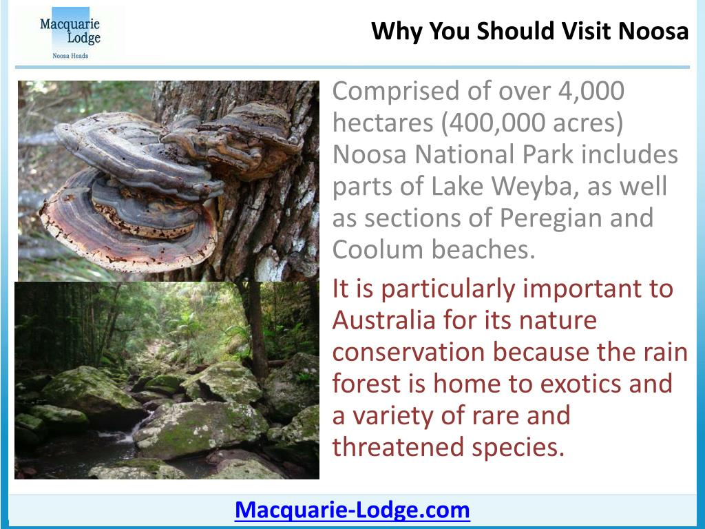 Comprised of over 4,000 hectares (400,000 acres) Noosa National Park includes parts of Lake