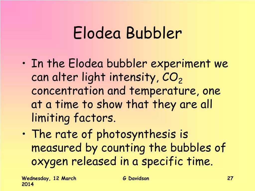 Elodea Bubbler