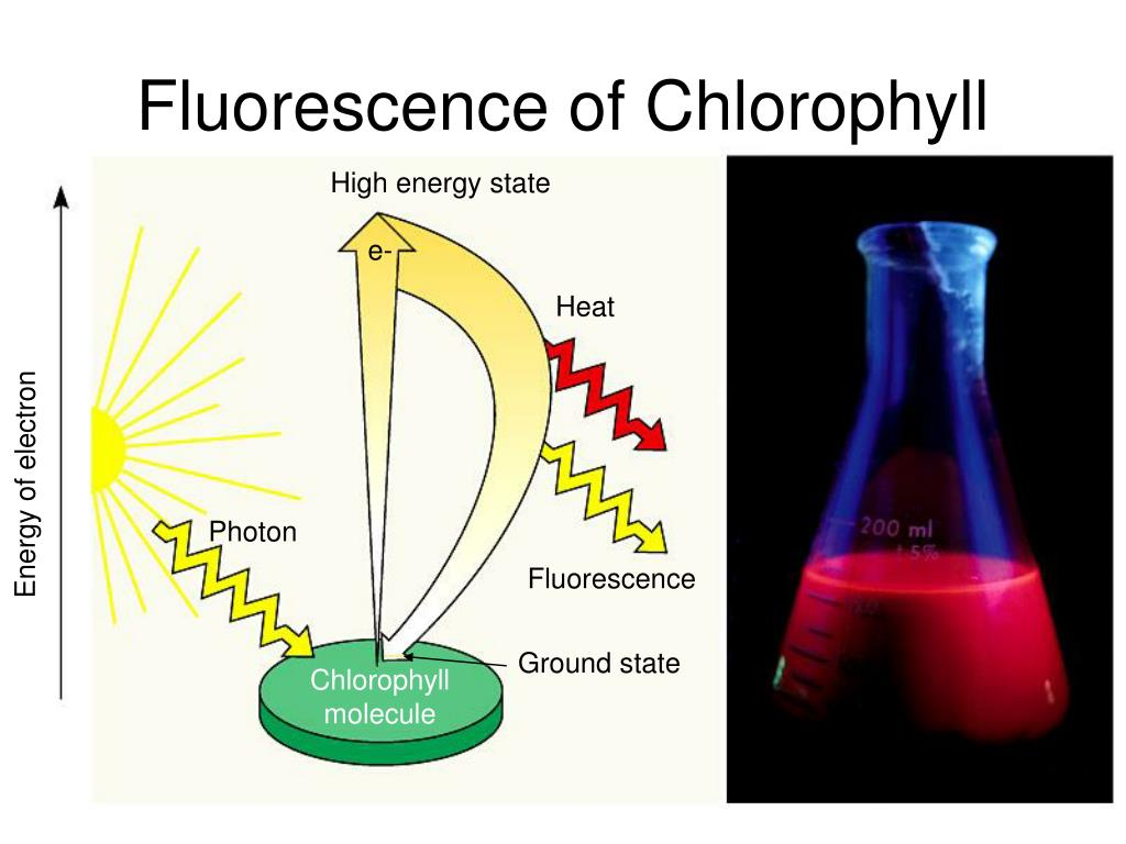 Fluorescence of Chlorophyll