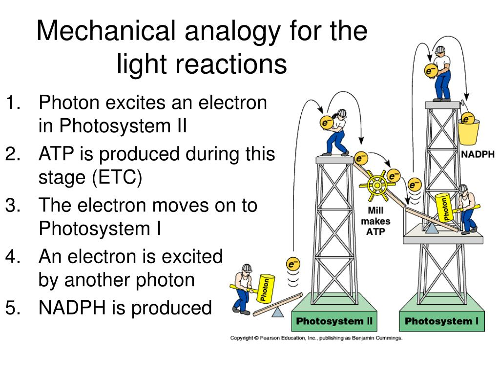 Mechanical analogy for the light reactions