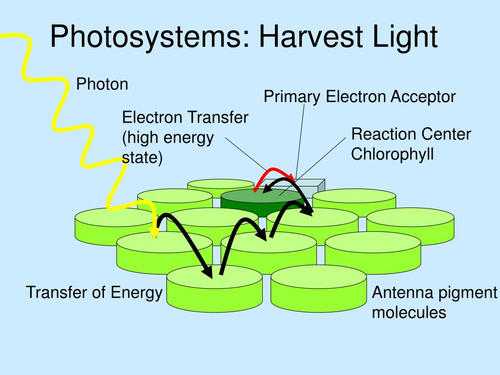 Photosystems: Harvest Light