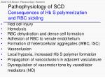 pathophysiology of scd consequences of hb s polymerization and rbc sickling