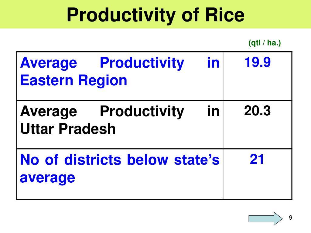 Productivity of Rice