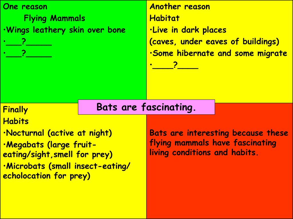 Bats are fascinating.
