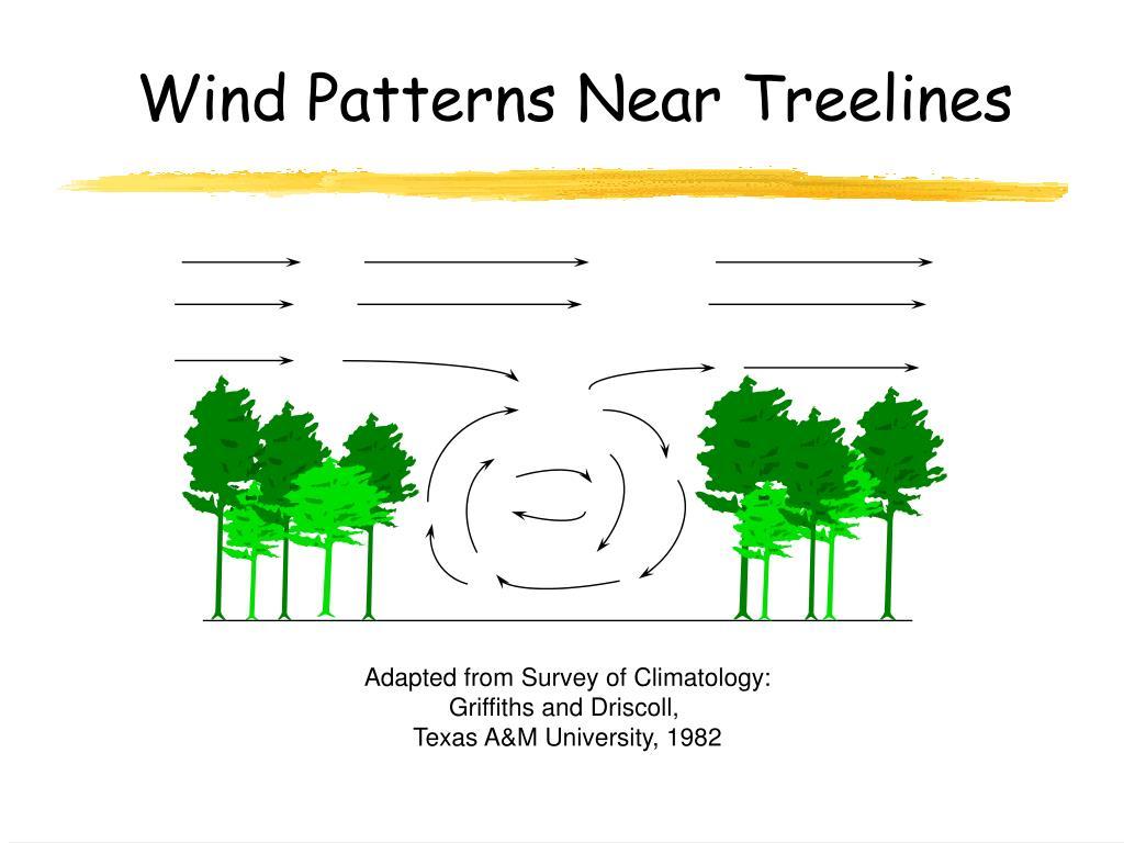 Wind Patterns Near Treelines