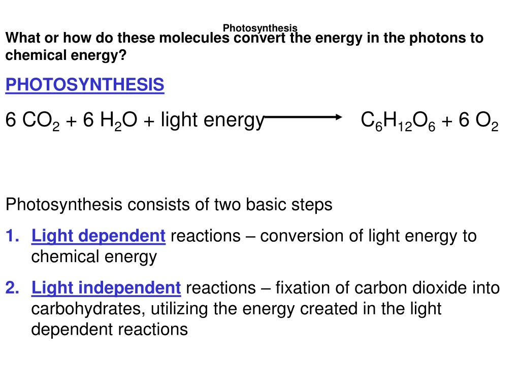 What or how do these molecules convert the energy in the photons to chemical energy?