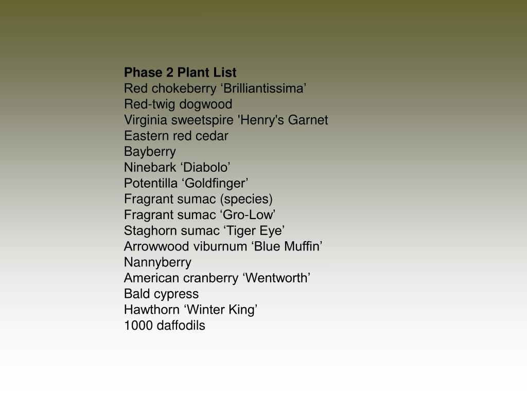 Phase 2 Plant List