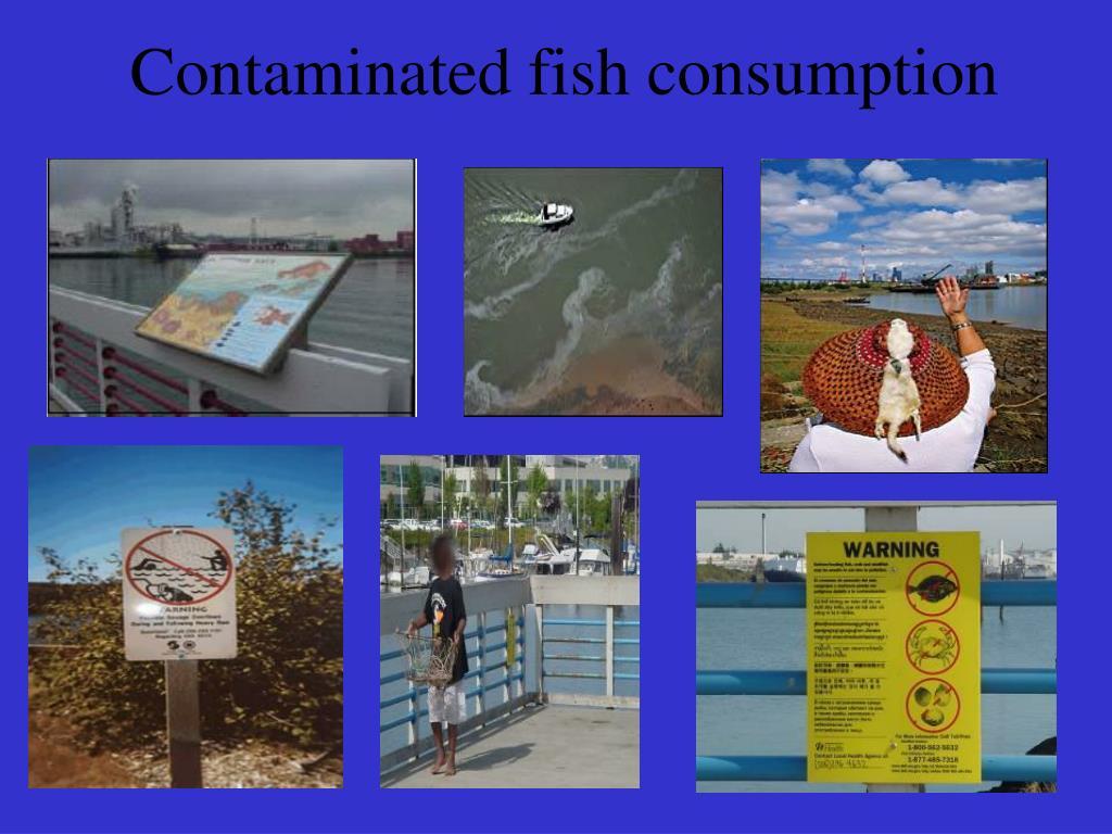 Contaminated fish consumption