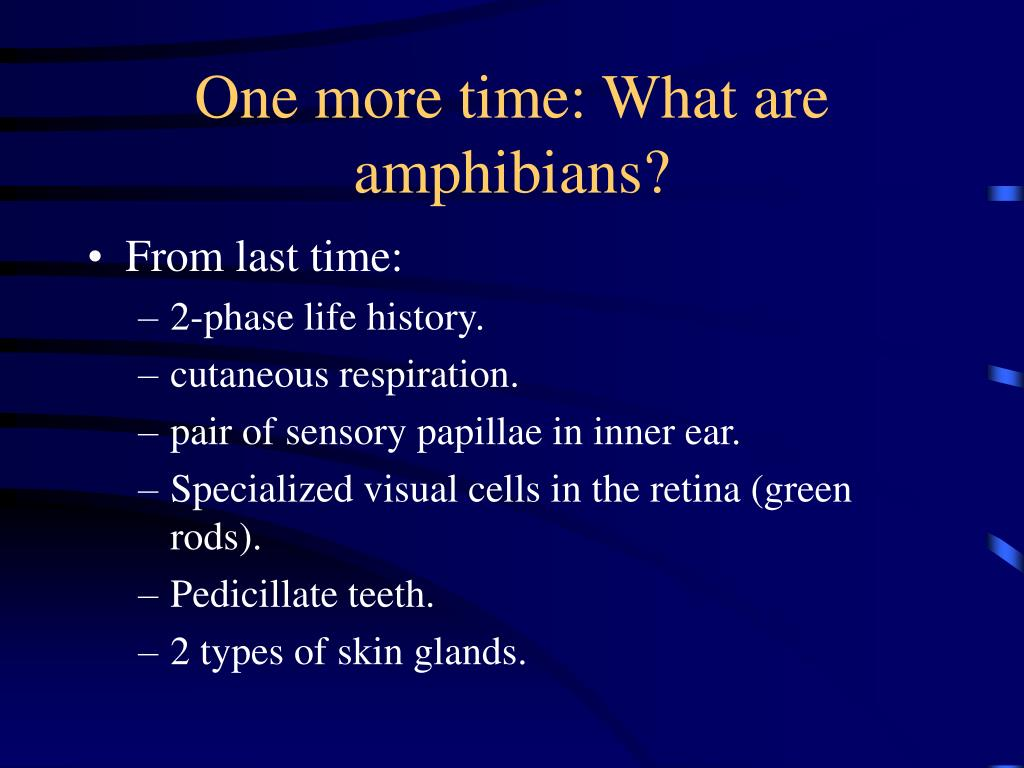One more time: What are amphibians?