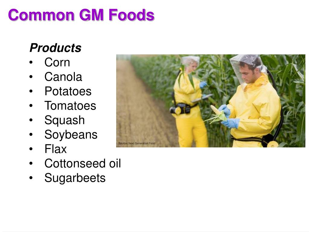 Common GM Foods