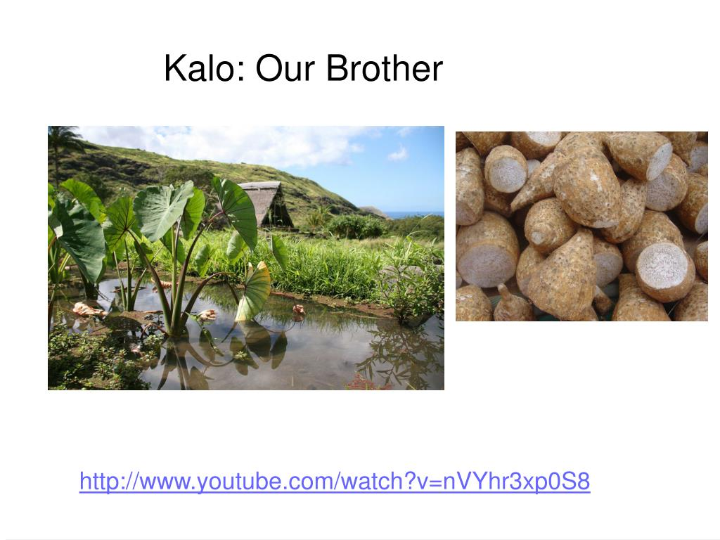 Kalo: Our Brother