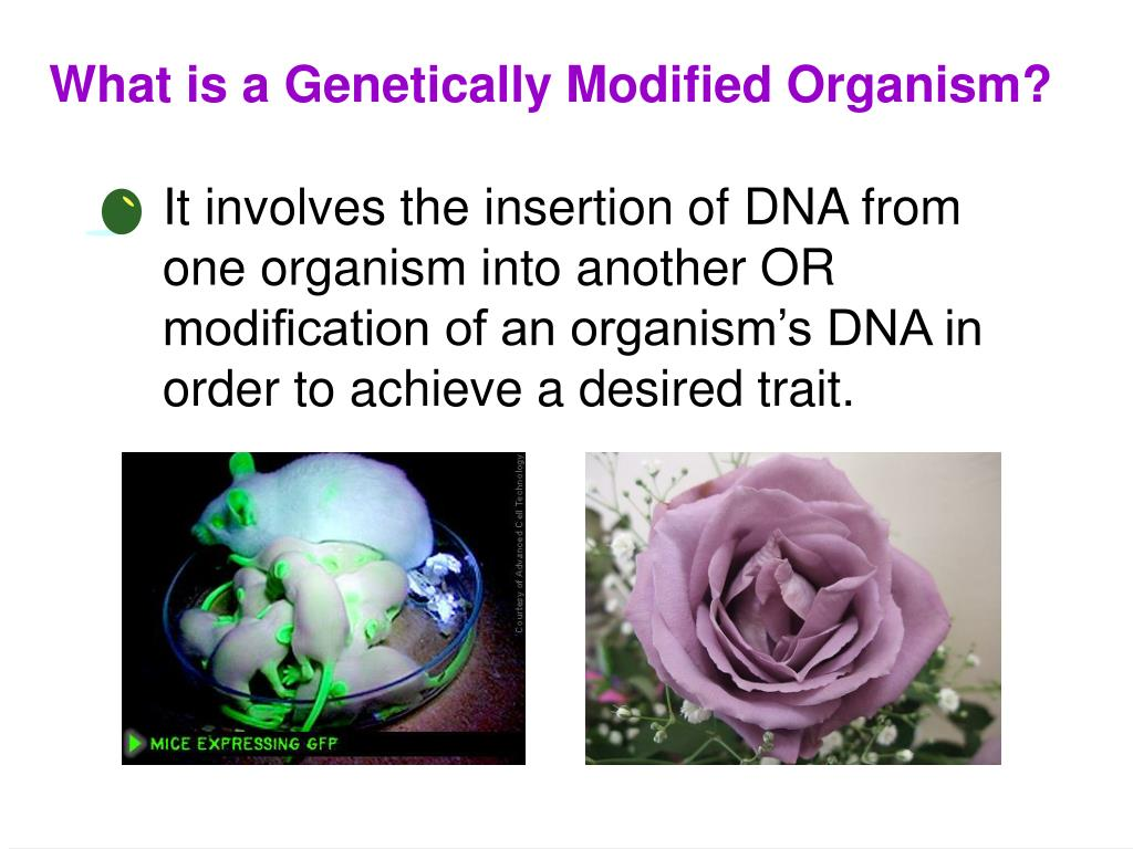 What is a Genetically Modified Organism?