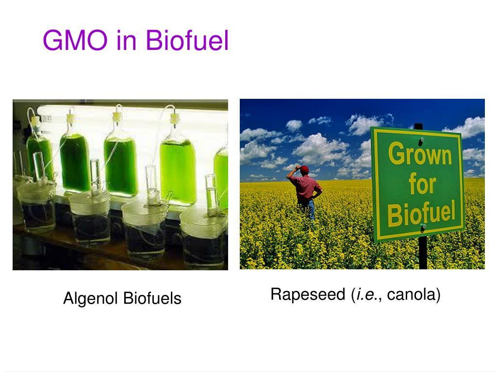 GMO in Biofuel