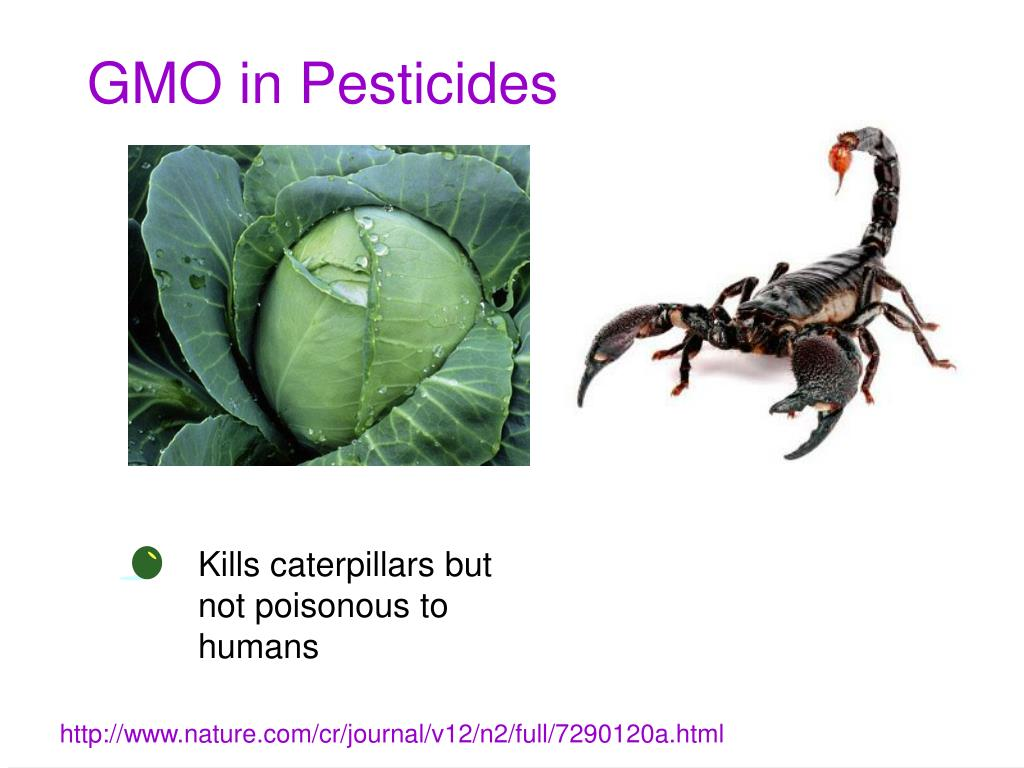 GMO in Pesticides