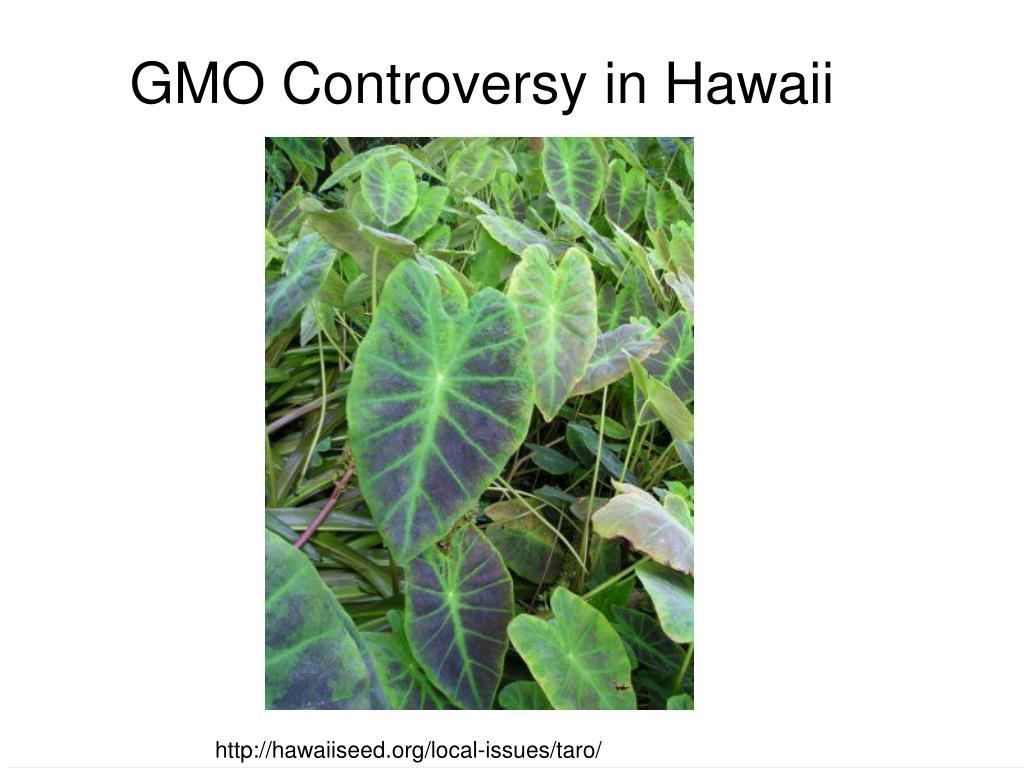 GMO Controversy in Hawaii