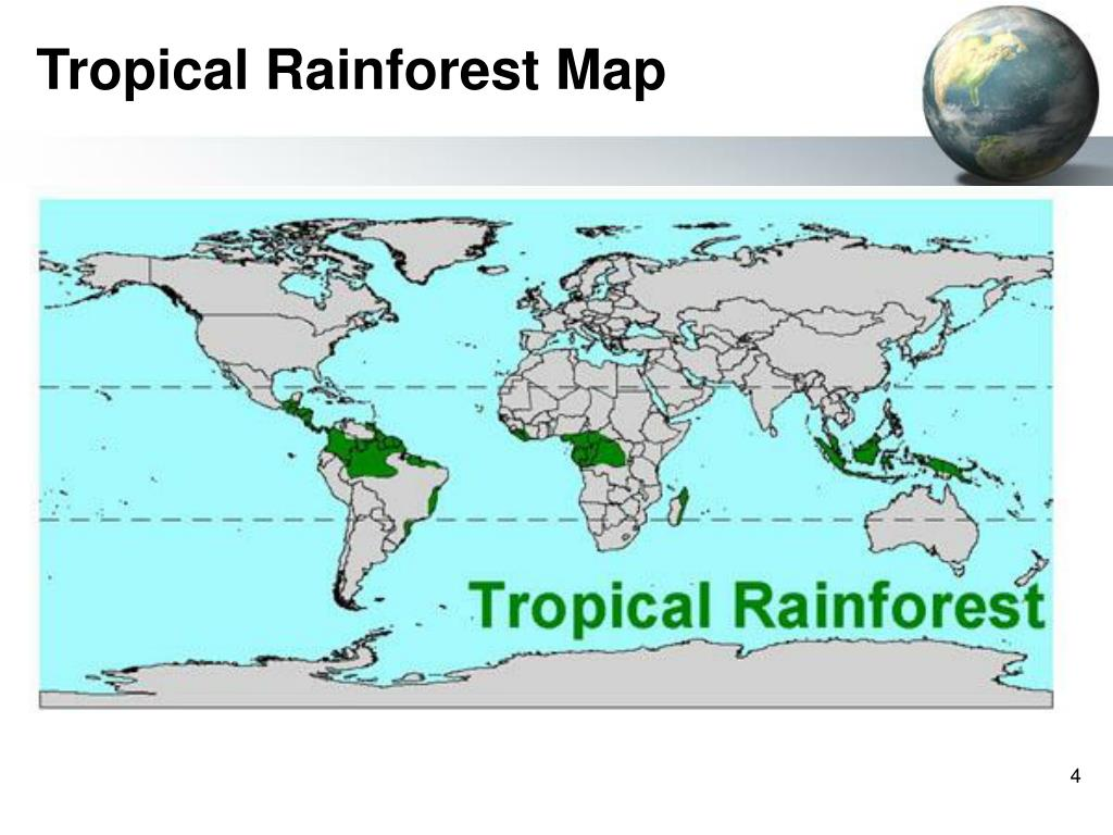 Tropical Rainforest Map