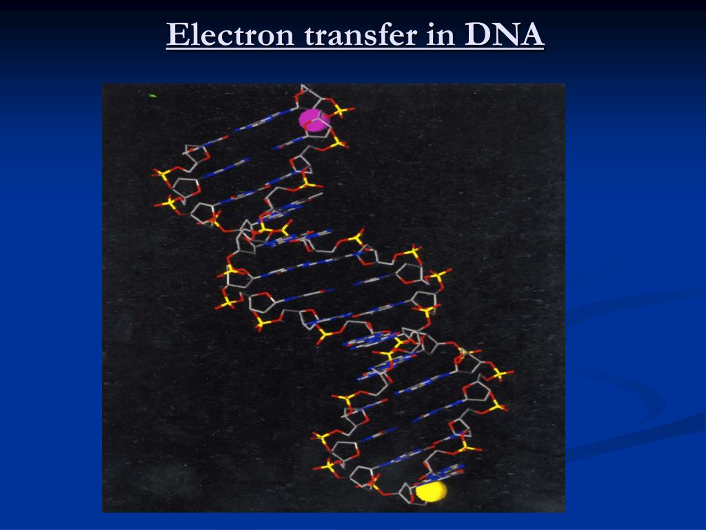Electron transfer in DNA