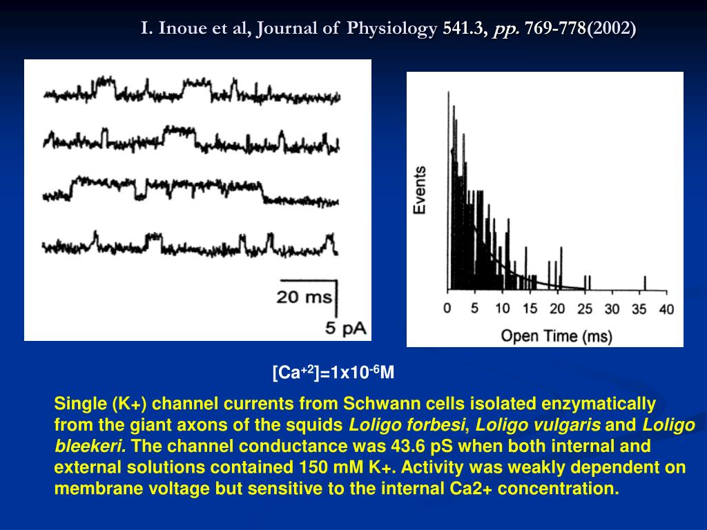 I. Inoue et al, Journal of Physiology
