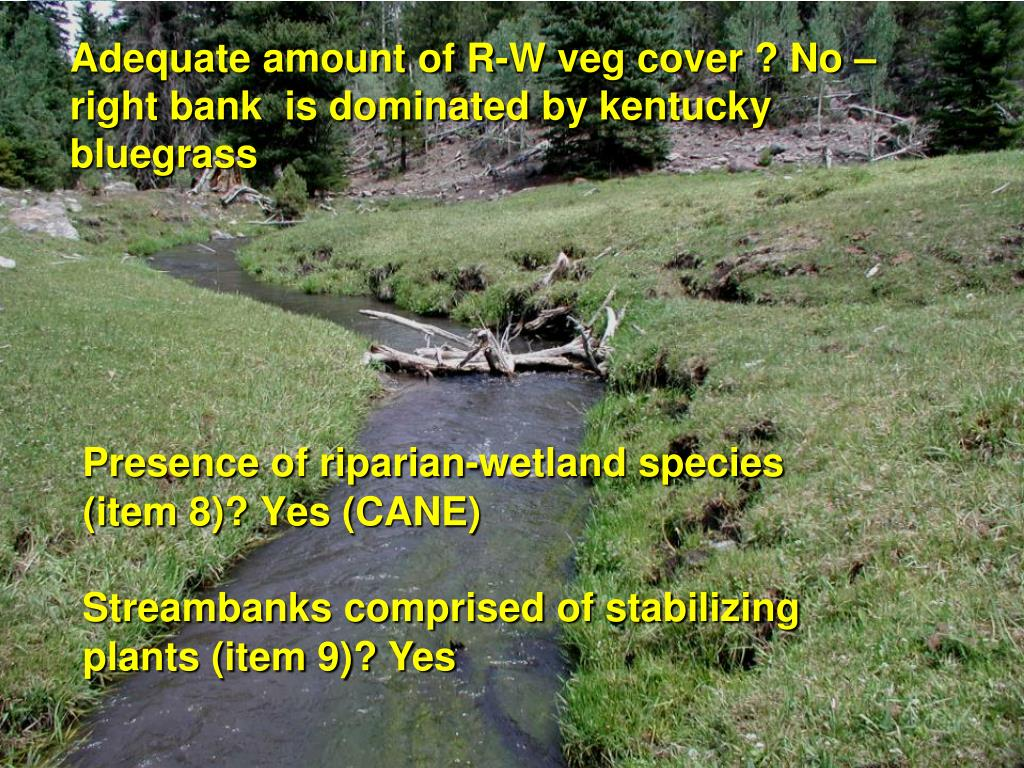 Adequate amount of R-W veg cover ? No – right bank  is dominated by kentucky bluegrass