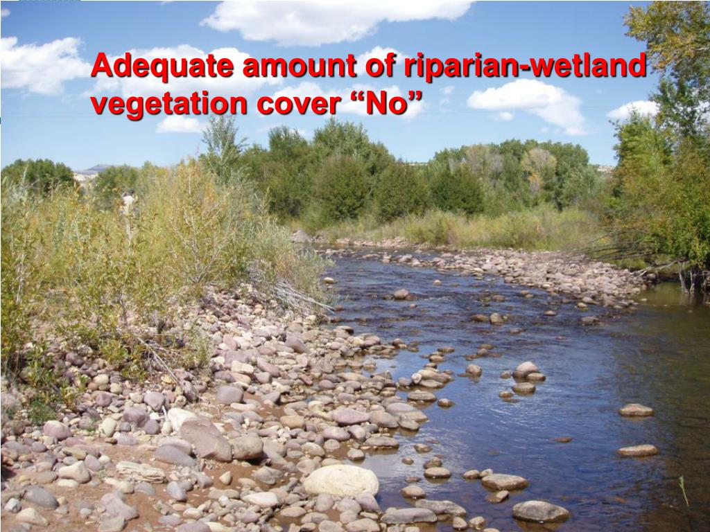 "Adequate amount of riparian-wetland vegetation cover ""No"""
