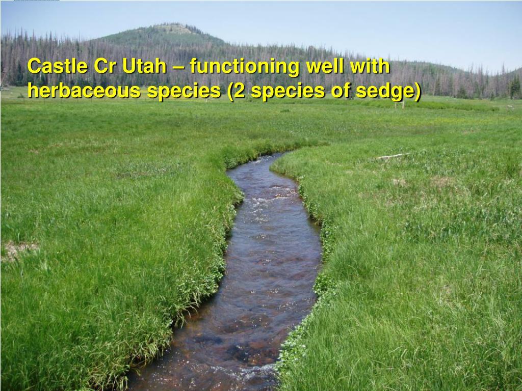 Castle Cr Utah – functioning well with herbaceous species (2 species of sedge)