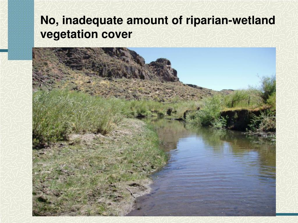 No, inadequate amount of riparian-wetland vegetation cover