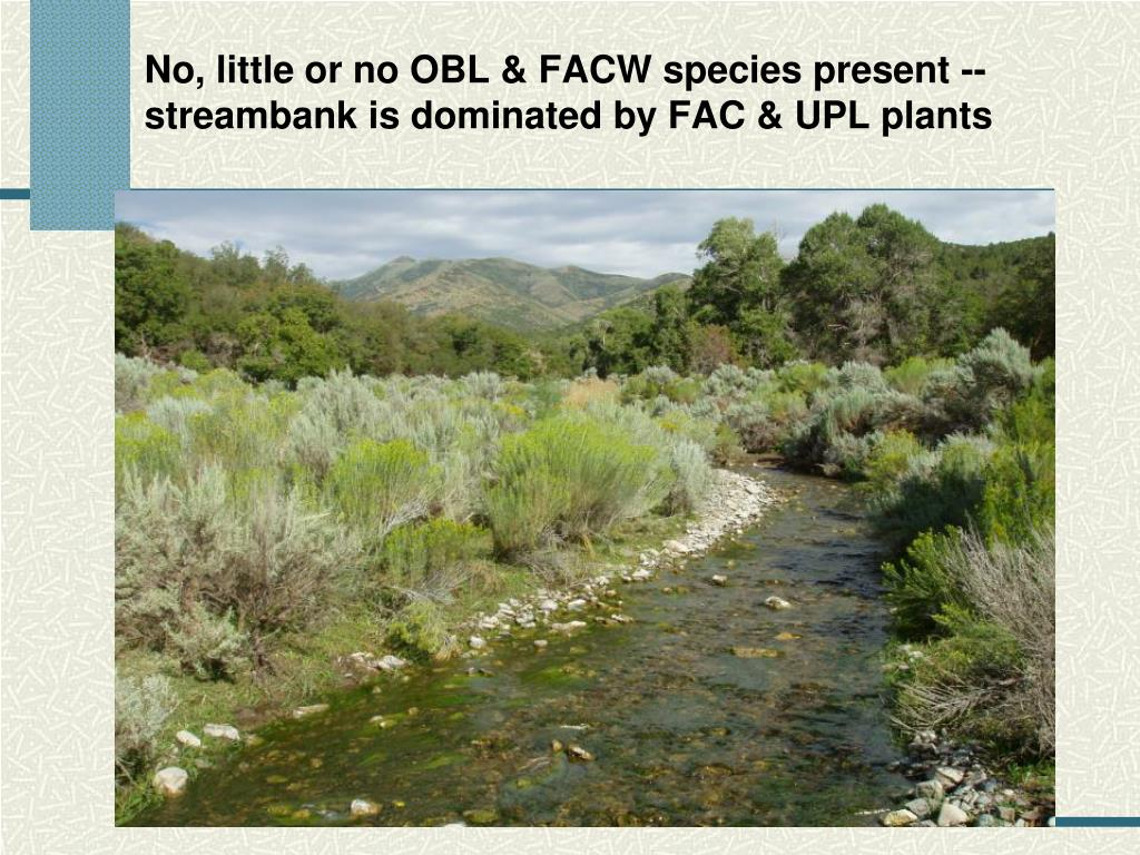 No, little or no OBL & FACW species present -- streambank is dominated by FAC & UPL plants