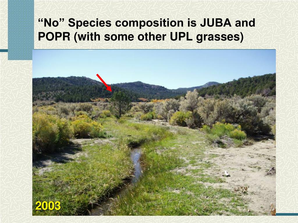 """""""No"""" Species composition is JUBA and POPR (with some other UPL grasses)"""