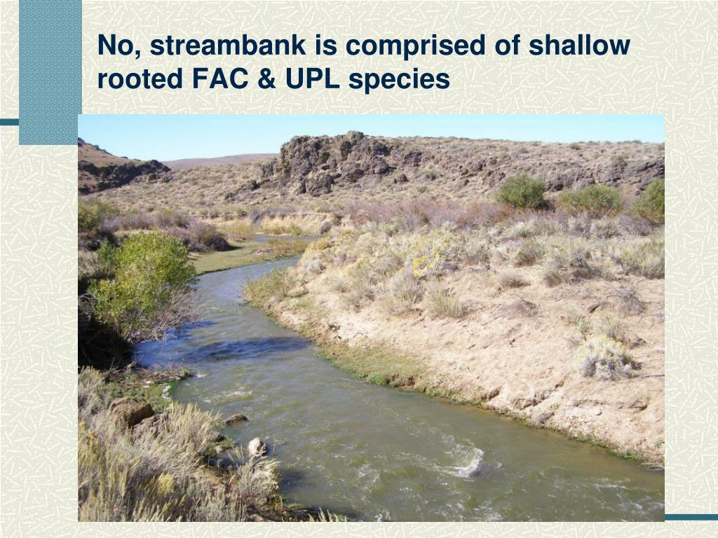 No, streambank is comprised of shallow rooted FAC & UPL species