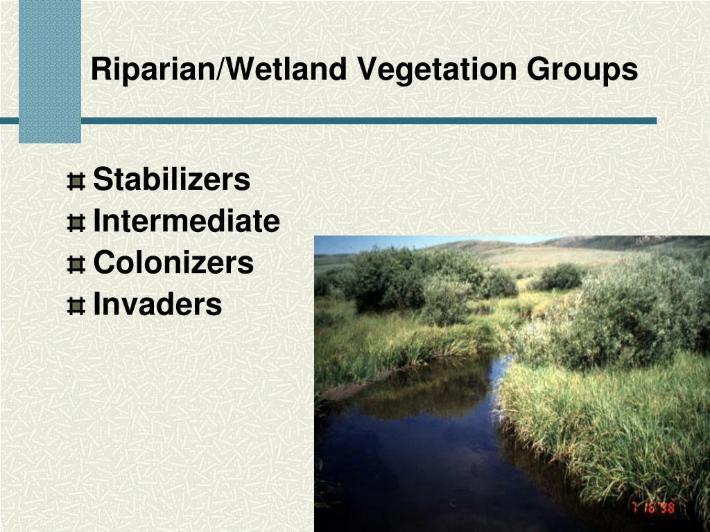 Riparian/Wetland Vegetation Groups