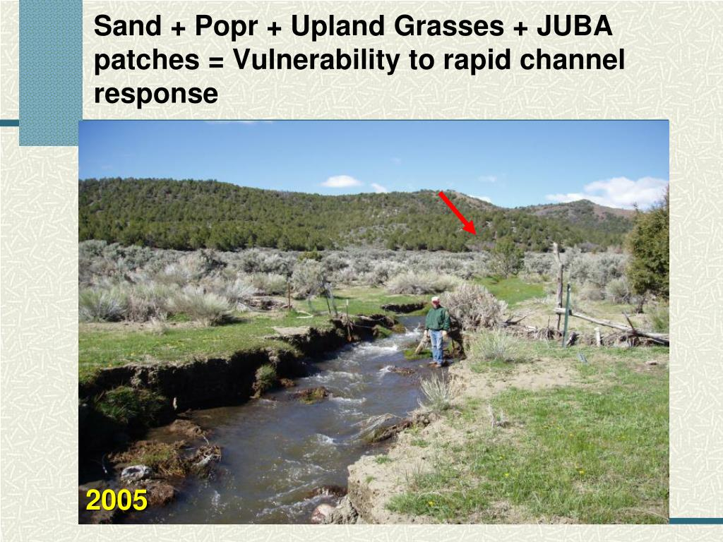 Sand + Popr + Upland Grasses + JUBA patches = Vulnerability to rapid channel response