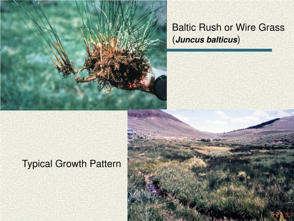 Typical Growth Pattern