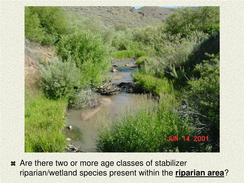 Are there two or more age classes of stabilizer riparian/wetland species present within the