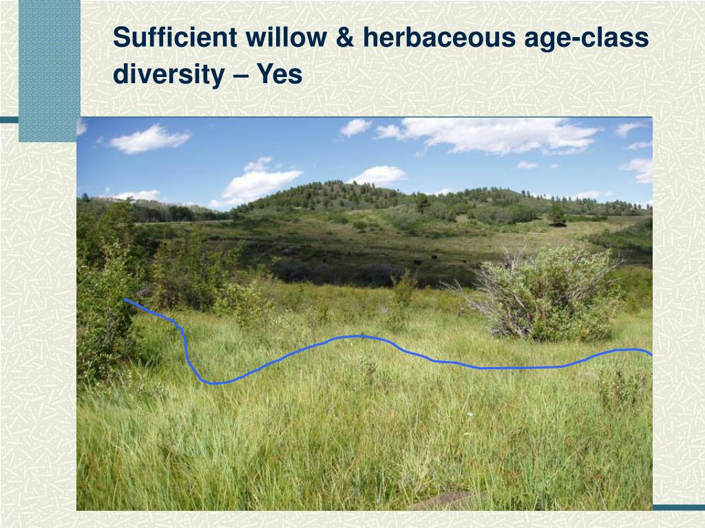 Sufficient willow & herbaceous age-class diversity – Yes