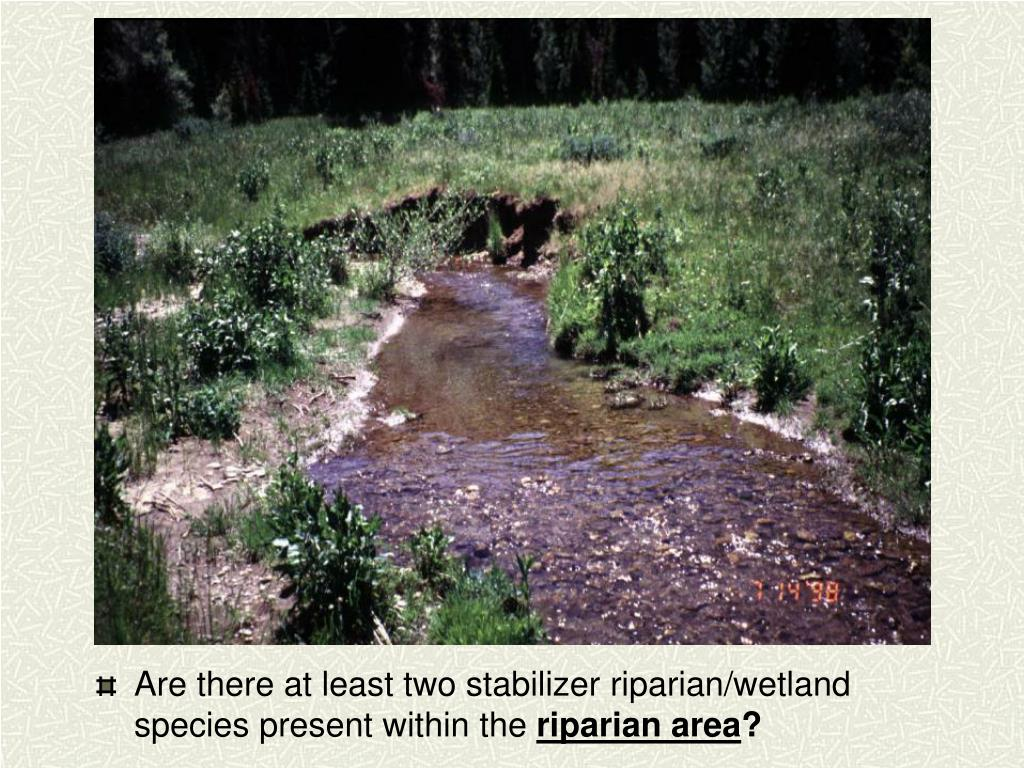 Are there at least two stabilizer riparian/wetland species present within the