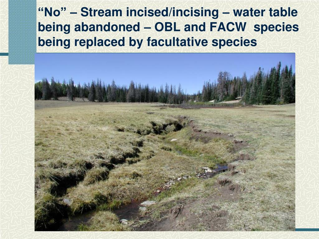 """""""No"""" – Stream incised/incising – water table being abandoned – OBL and FACW  species being replaced by facultative species"""