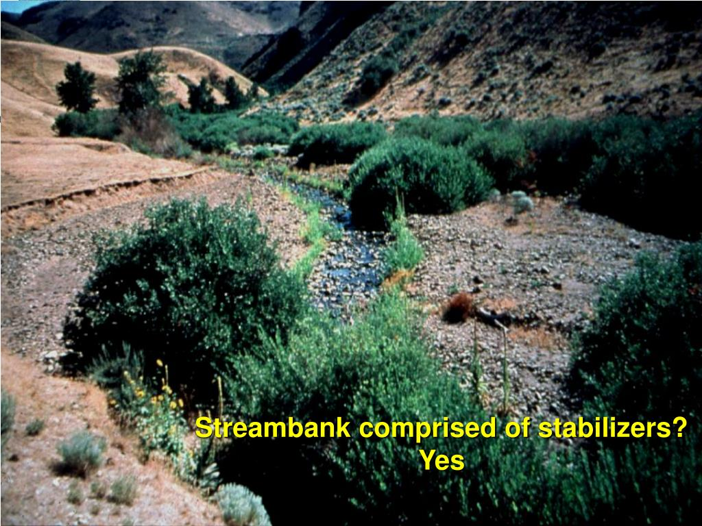Streambank comprised of stabilizers? Yes