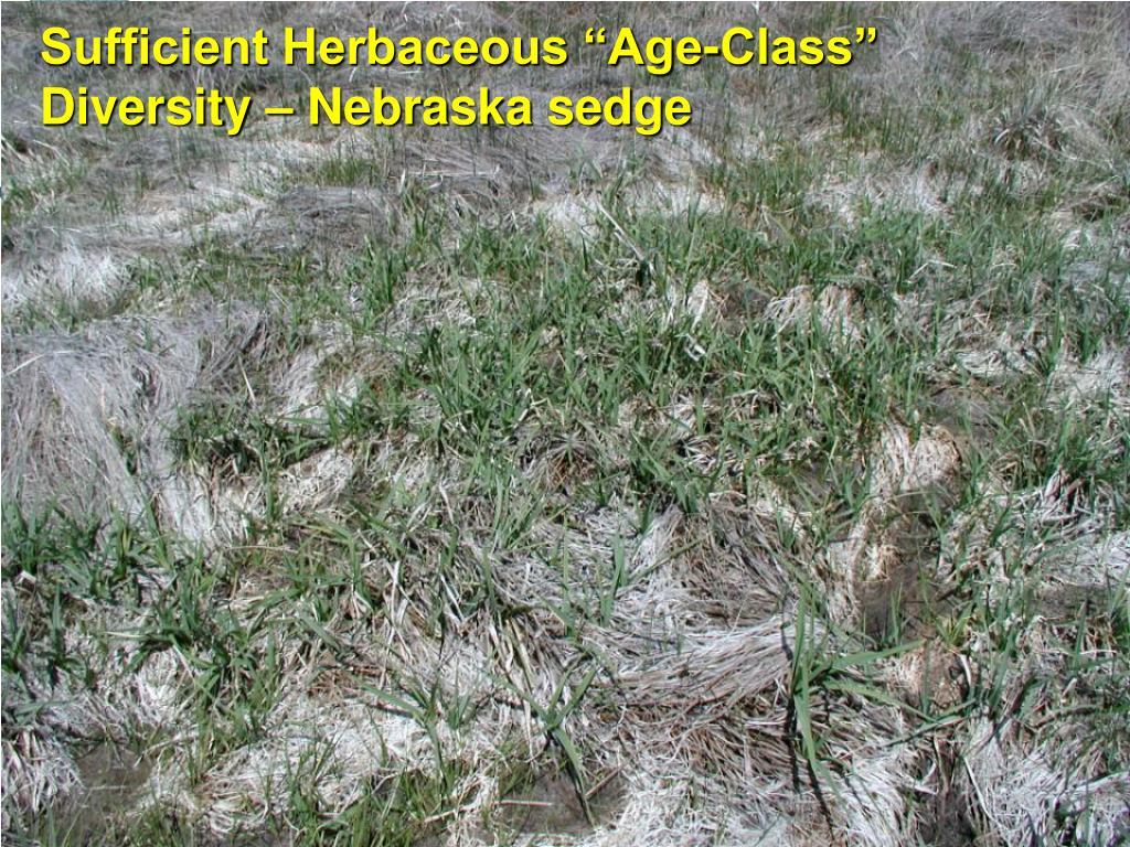 """Sufficient Herbaceous """"Age-Class"""" Diversity – Nebraska sedge"""