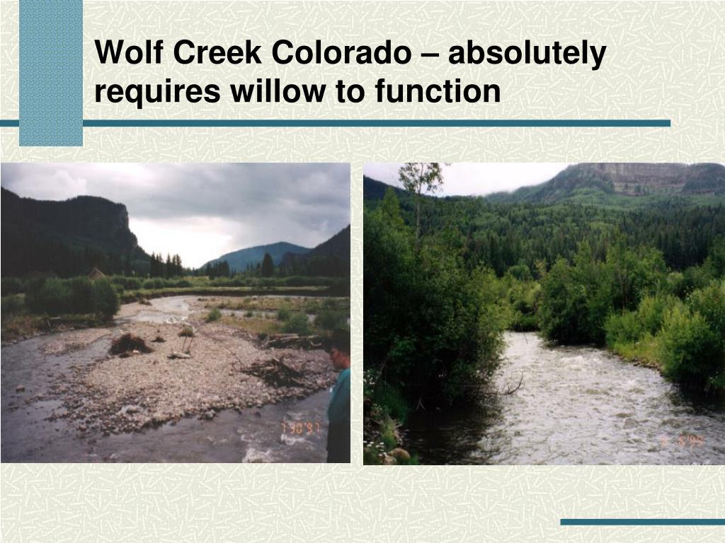 Wolf Creek Colorado – absolutely requires willow to function