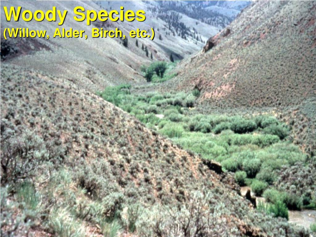 Woody Species