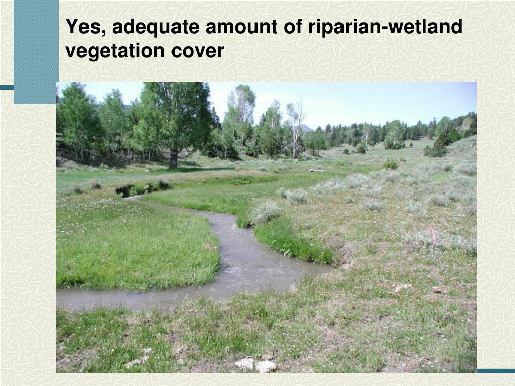 Yes, adequate amount of riparian-wetland vegetation cover