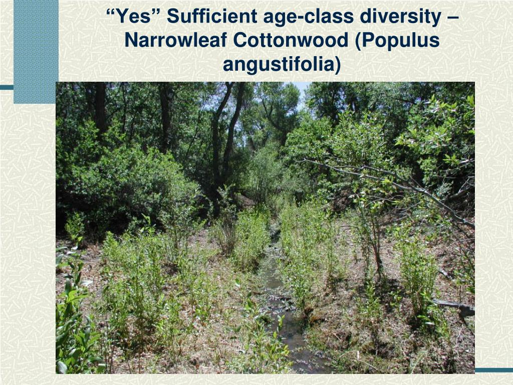 """""""Yes"""" Sufficient age-class diversity – Narrowleaf Cottonwood (Populus angustifolia)"""