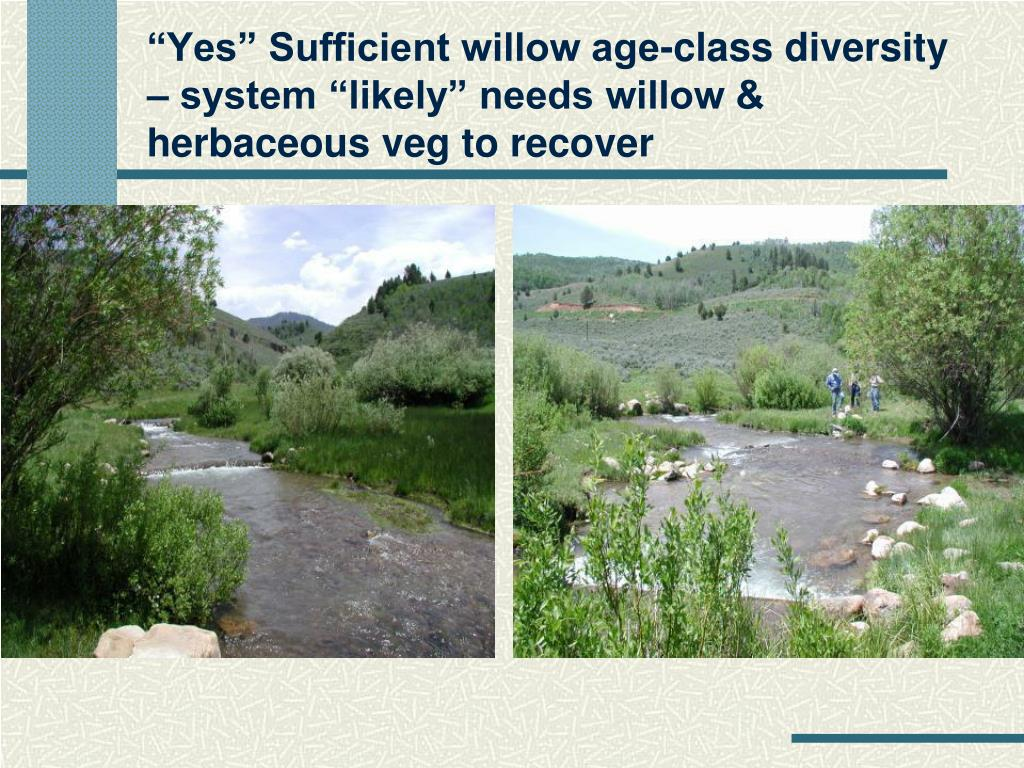 """""""Yes"""" Sufficient willow age-class diversity  – system """"likely"""" needs willow & herbaceous veg to recover"""