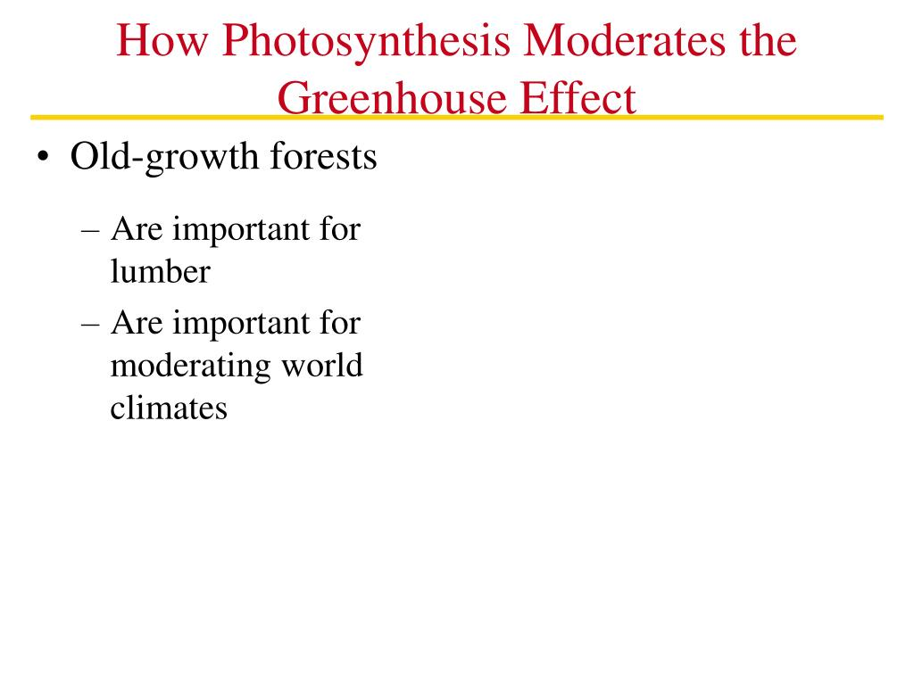 How Photosynthesis Moderates the Greenhouse Effect