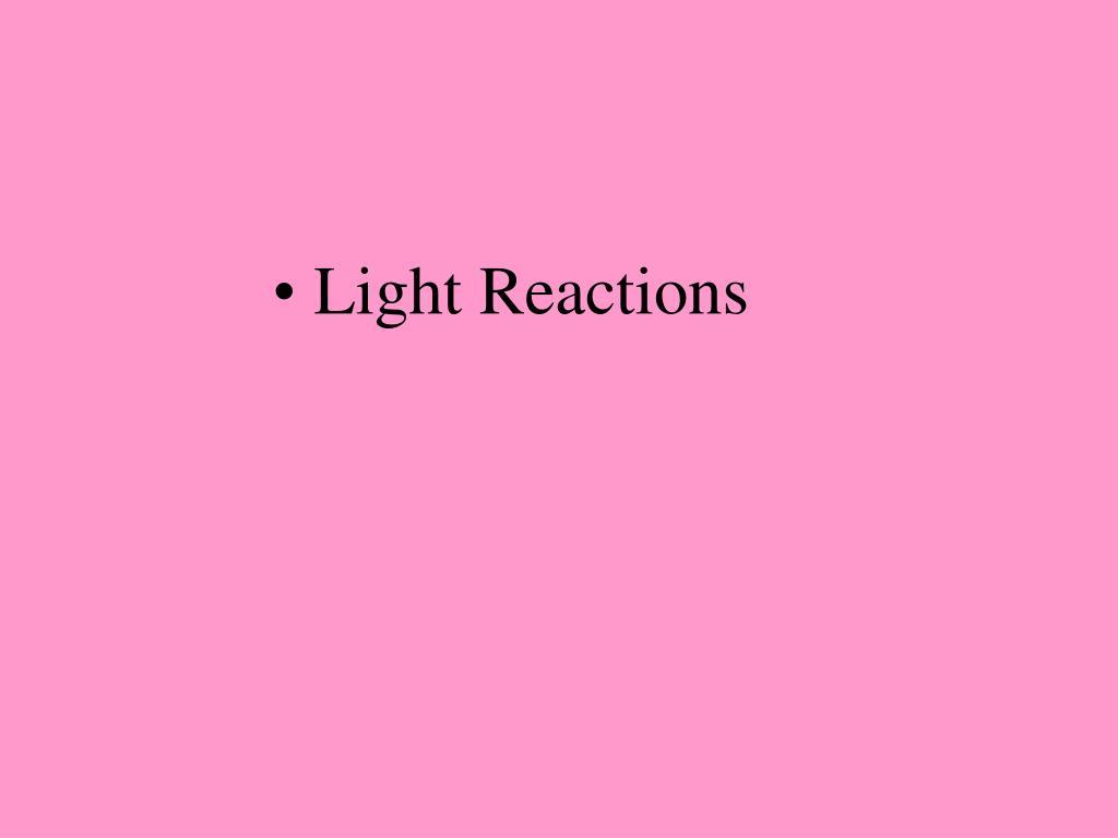 Light Reactions