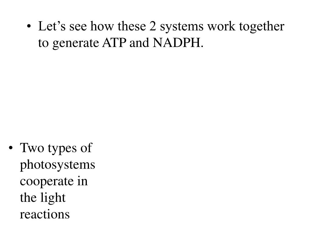 Let's see how these 2 systems work together to generate ATP and NADPH.