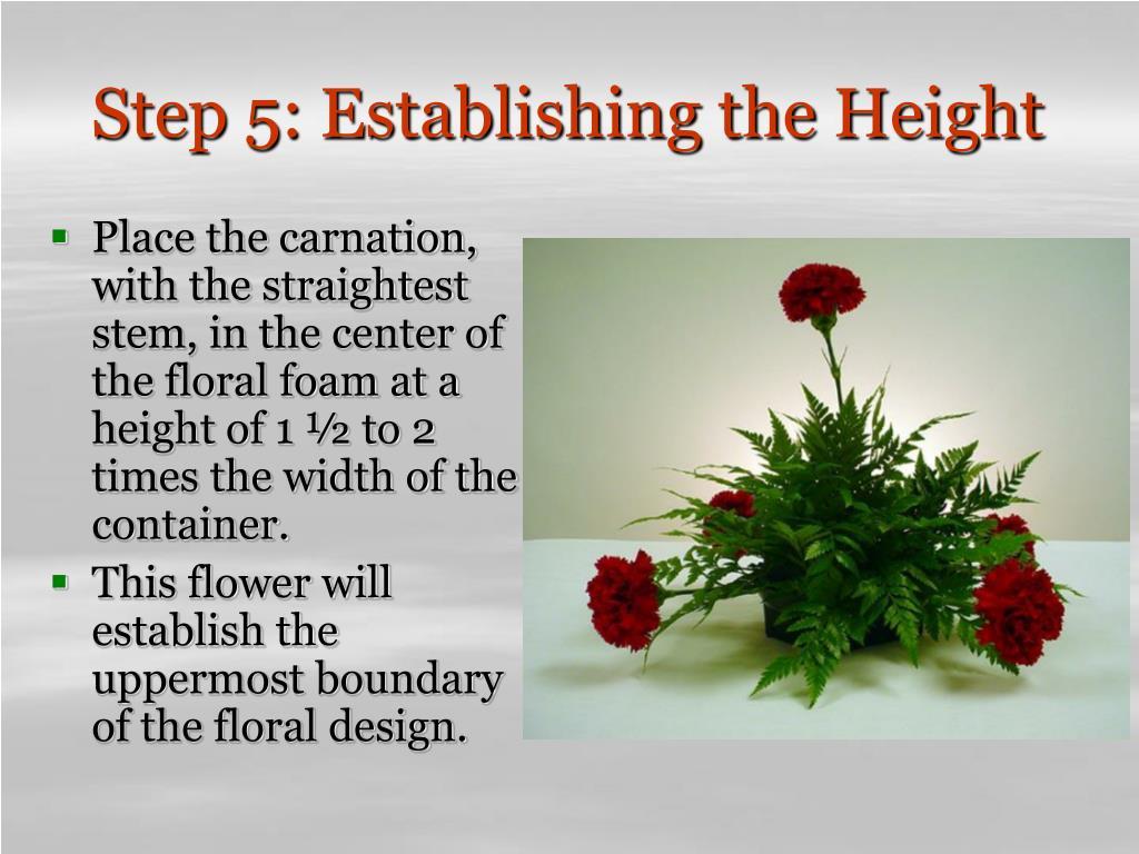 Step 5: Establishing the Height