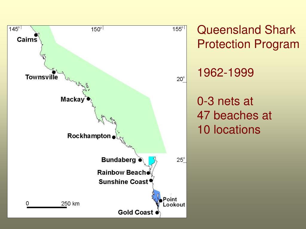Queensland Shark